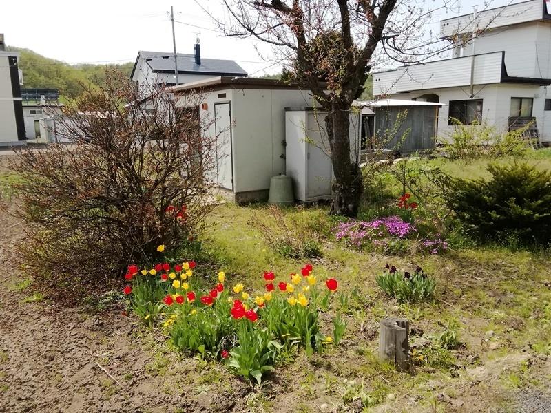 20190517うちの庭.JPG