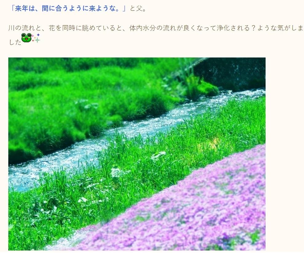 20190527ひがしもこと芝桜まつり2.jpg