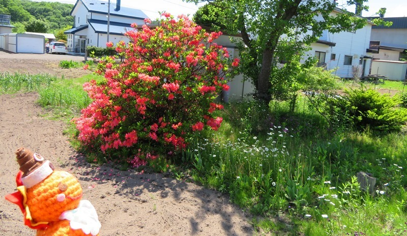 20190603うちの庭4.JPG