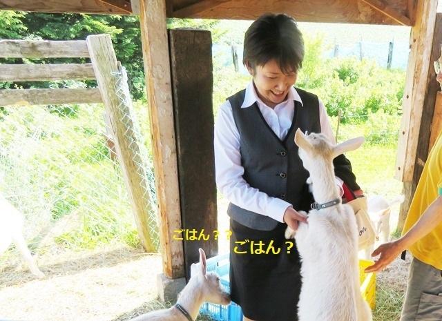 20190626ヤギさん2.JPG