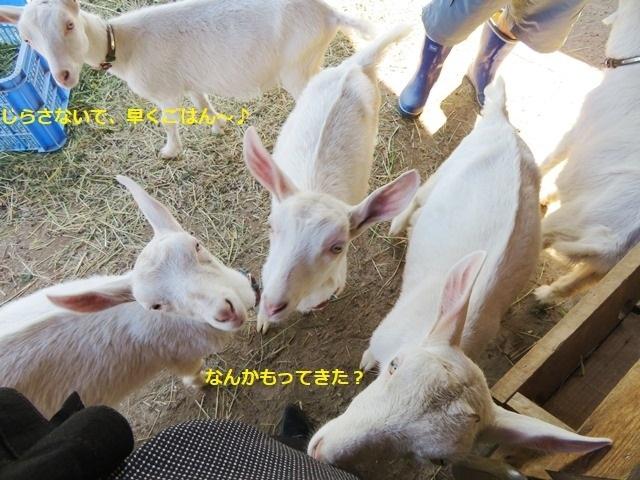 20190626ヤギさん4.JPG