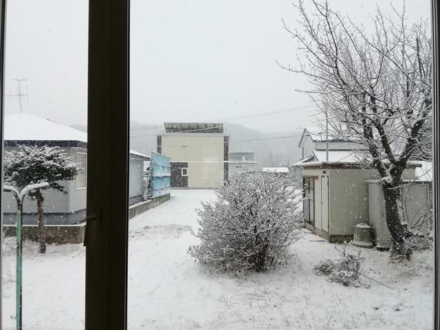 20191118とうとう雪が (1).jpg