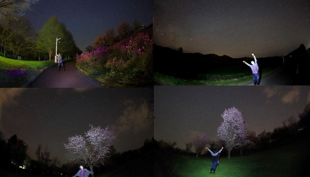 20200512夜桜.jpg